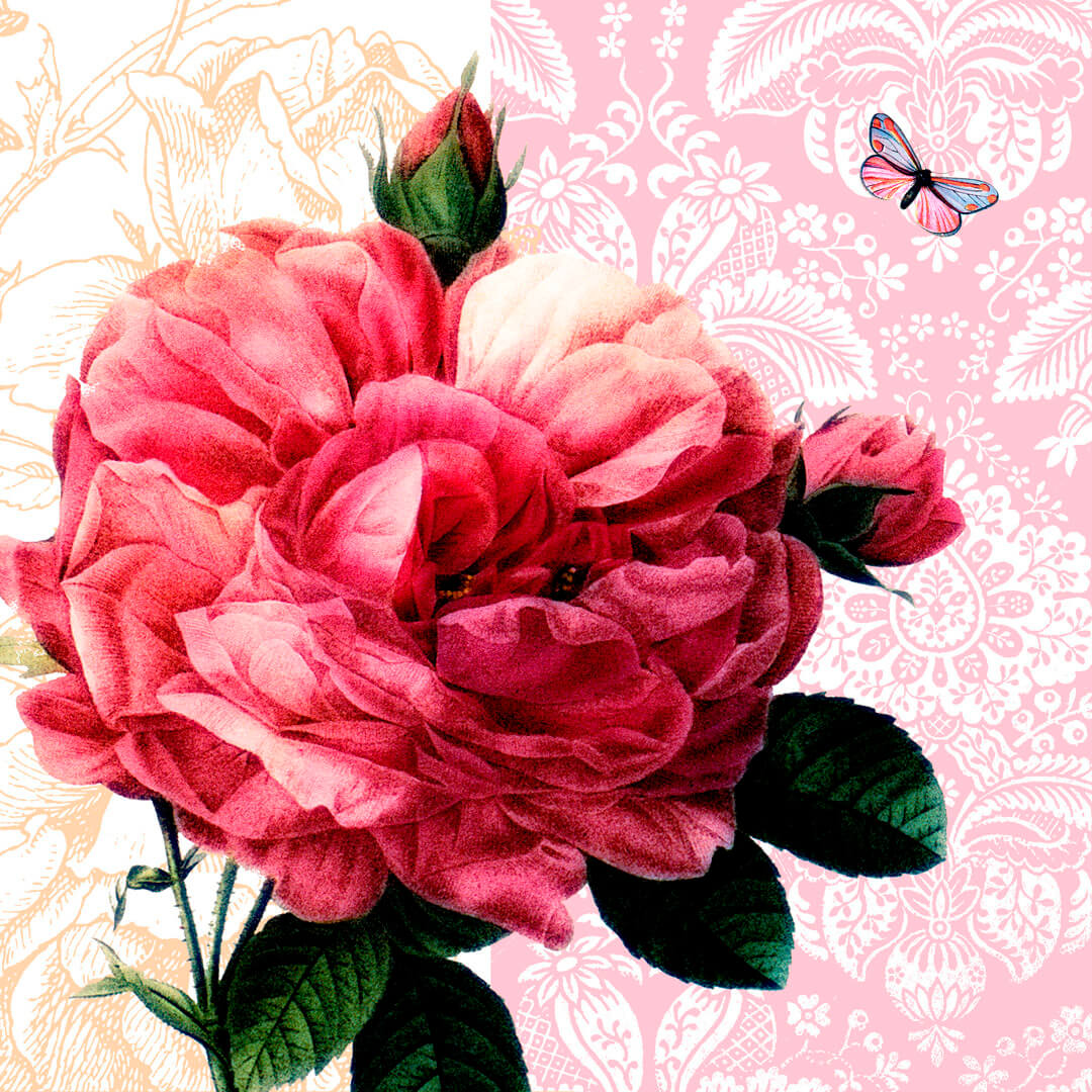 Heaven-Roses