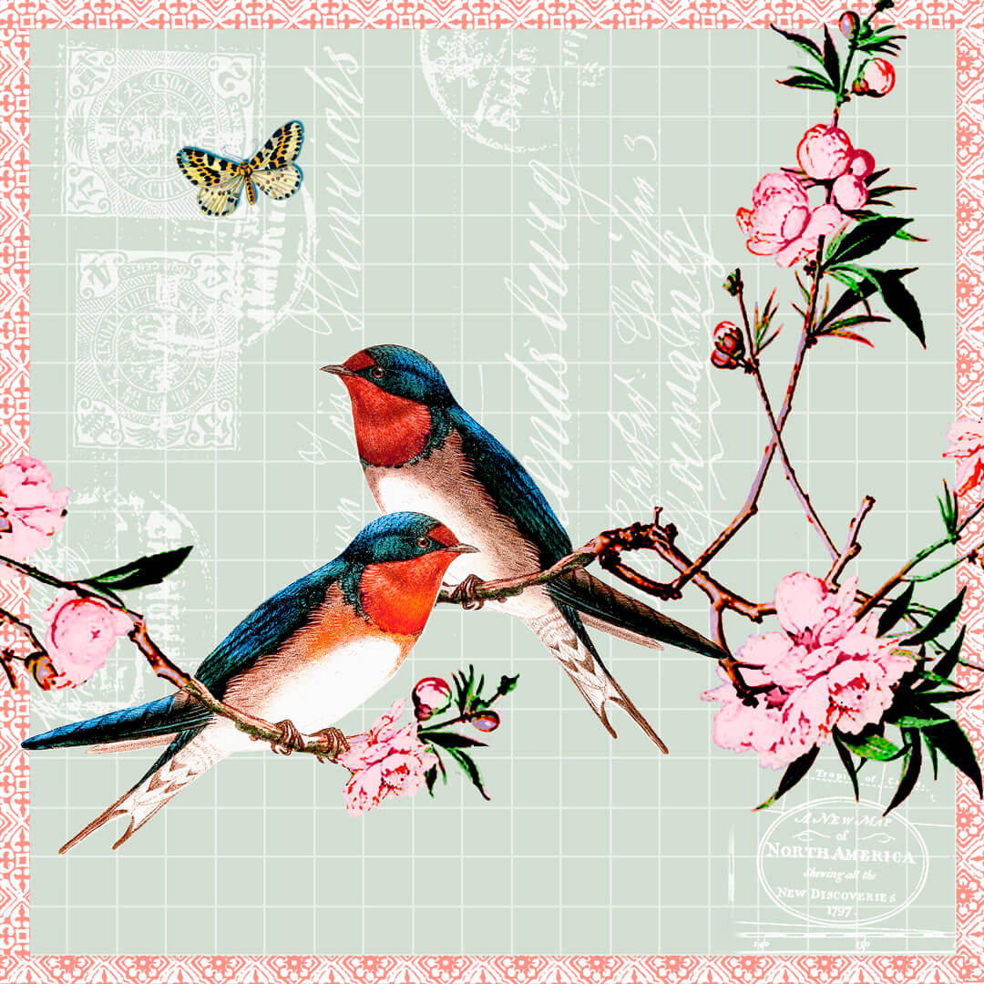 Swallows-3