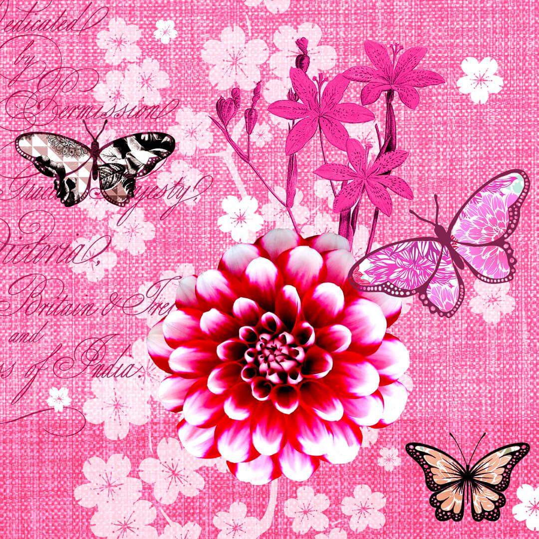 Pink-Moon-Dahlie1