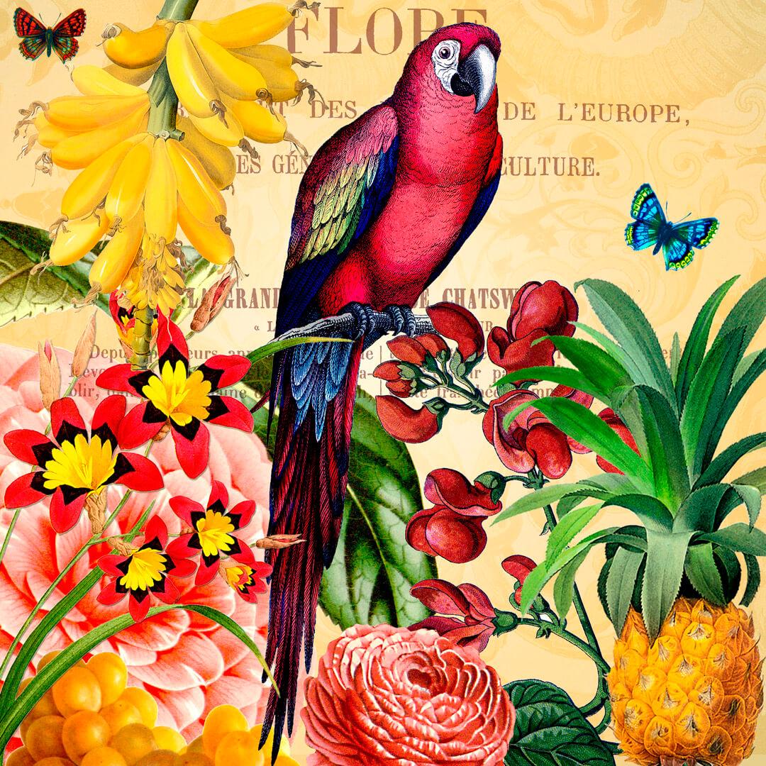 Vegetable-garden-Papagei4