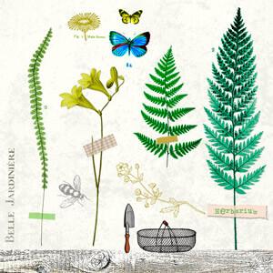 bb_Herbarium1