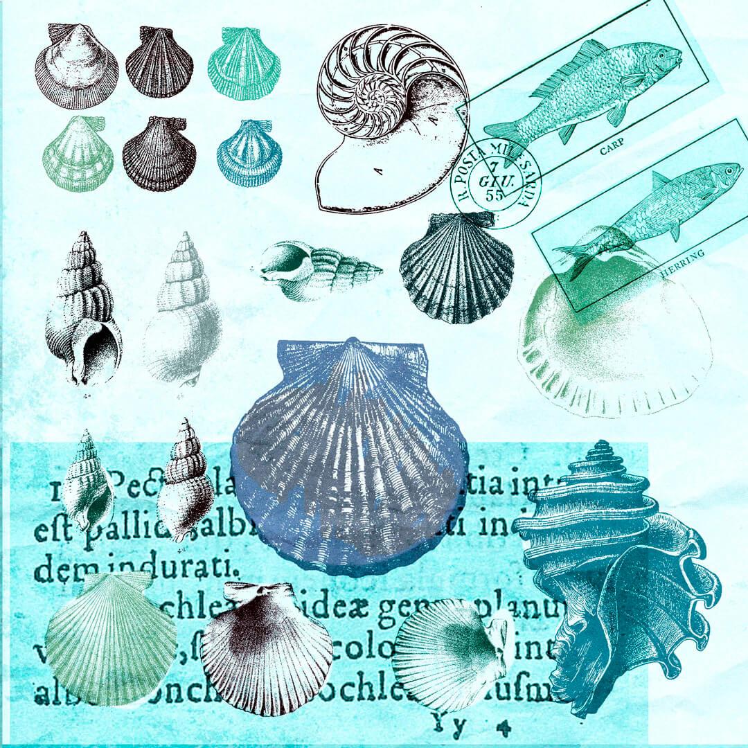Muscheln-Antike-blau2